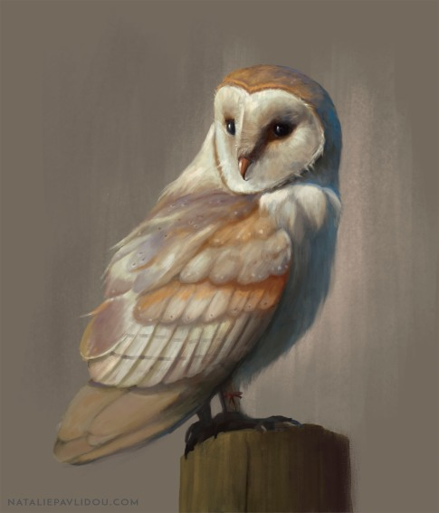 Owl for web